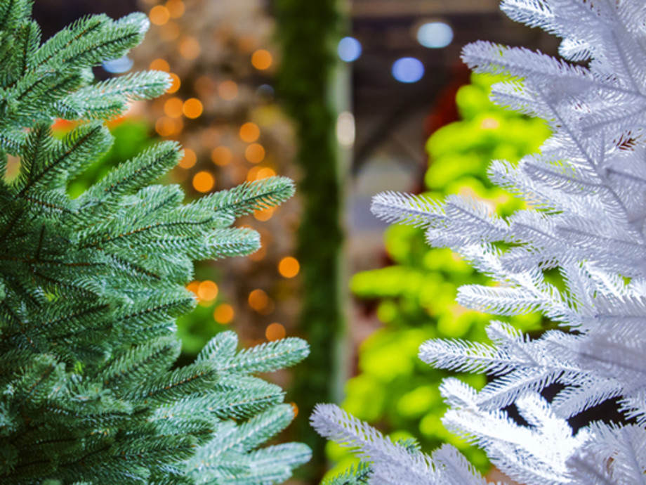 Fake or Fir? A Look at How the Christmas Tree Industry Impacts Our Environment